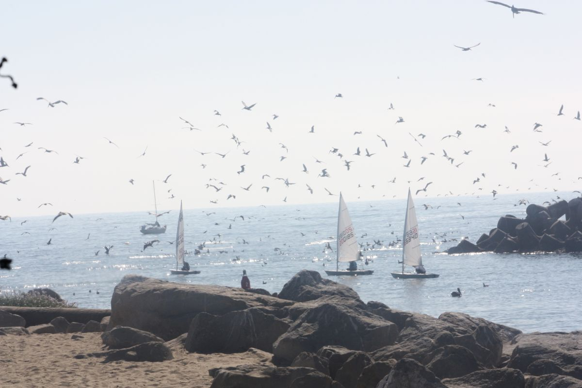 Anch_birds_harbor_mouth