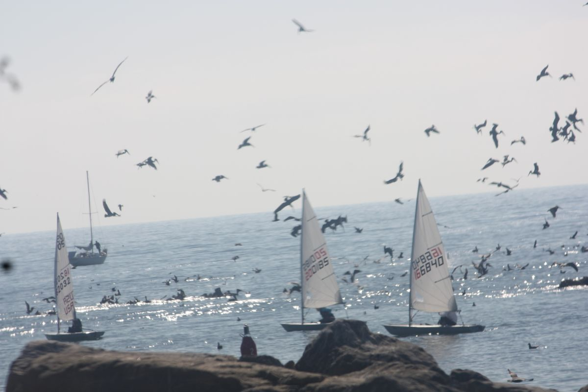Anch_harbormouth_boats_diving